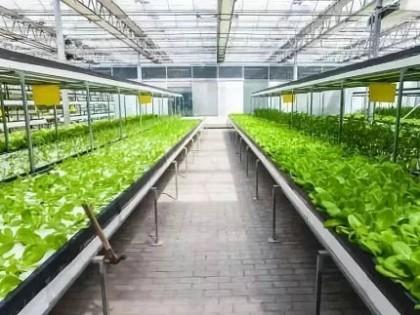 现代农业多种农业生产经营模式
