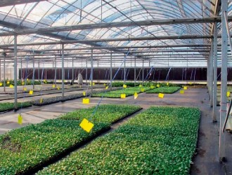 我国农业生产在物联网应用方面存在的难题及解决措施