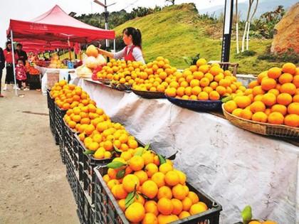 印江推进现代农业提质增效