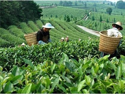 重庆再添两现代农业科技示范展示基地