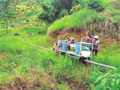 芒果种植也用上了智慧农业