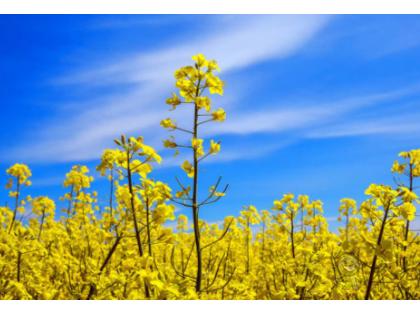 小气候观测仪在现代农业生产中的作用及功能分析