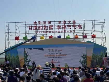 天津武清:都市型现代农业展现丰收新图景