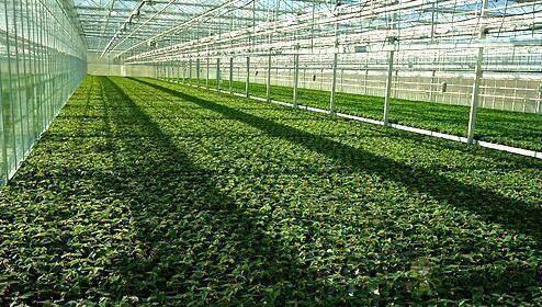 什么是以物联网为架构的智慧农业系统?