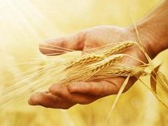 """中央经济工作会议再提粮食安全:解决""""种子""""问题,守住18亿亩耕地红线"""