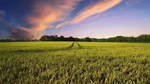 物联网赋能精准农业