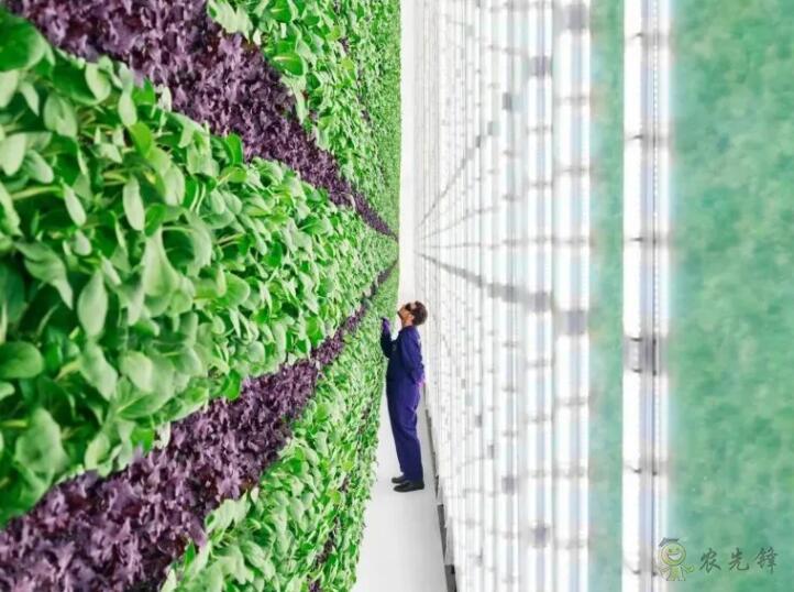 垂直农场模式,需要创新重构