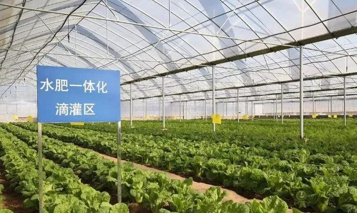 【专家解读】柯炳生:有机农业的发展还是比较受限