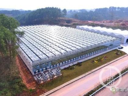 智慧大棚新动能  育苗温室引入高科技
