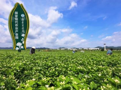 打造农业全产业链该怎么做?看三个经典案例