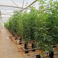 耐特菲姆水肥一体化系统 施肥系统