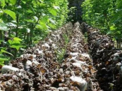 【模式研究】多种循环农业模式参考