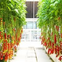 蔬菜种植温室