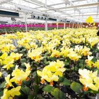 花卉种植温室