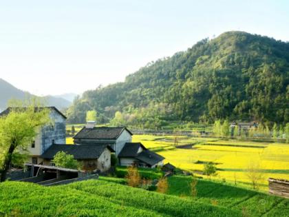 时伟:大学生融入乡村振兴的实施路径