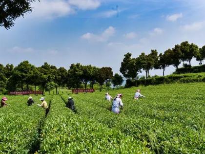 贵州:全力开创休闲农业和乡村旅游发展新局面