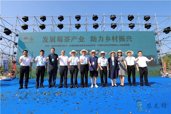 湖南张家界:发展莓茶产业 助力乡村振兴
