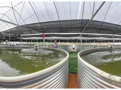 数字渔业装备在水产养殖中的应用