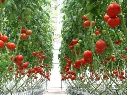 """无土栽培:让农业告别""""靠天吃饭"""""""