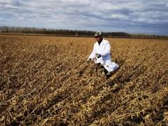 黑龙江大豆育种取得重大突破:5个品种平均亩产突破570斤