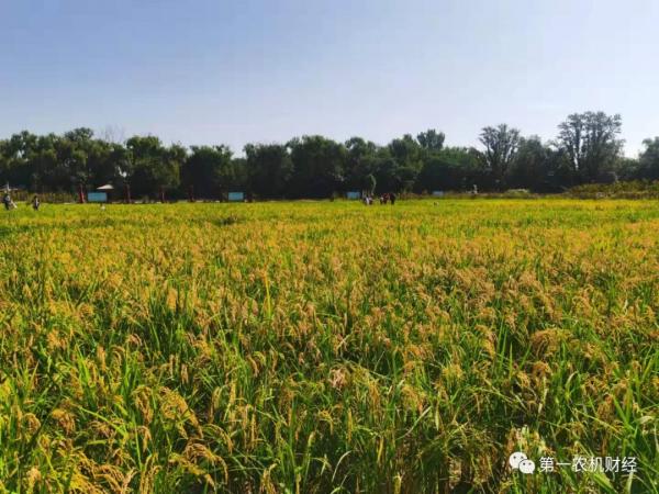 央媒呼吁:莫让种粮成本侵蚀农民收益