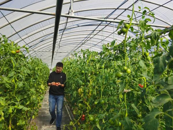 """塑料大棚""""智能化"""",北京开展高效设施农业用地试点"""