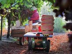 明星农业机器人公司Burro完成1090万美元融资,拆包即可安装使用