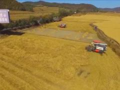 吉林水稻全程机械化作业, 助力增产增收